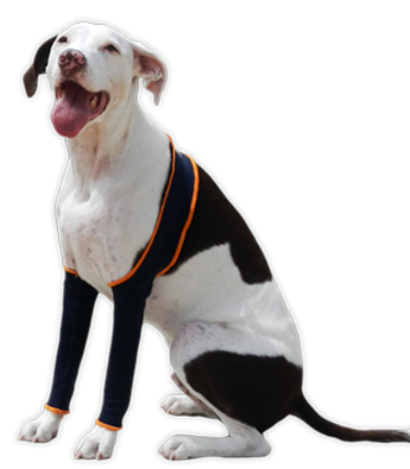 H4Legs brand H-Leggings on a medium sized dog
